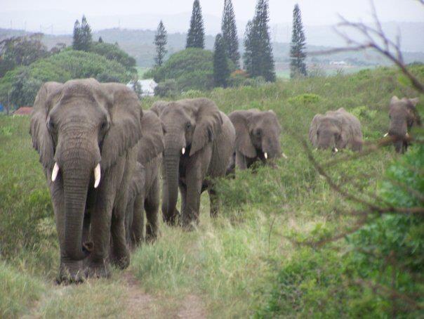 Vì sao đàn voi đi bộ 12 tiếng đến đưa tiễn một người qua đời, viếng mộ suốt 7 năm? - Ảnh 3.