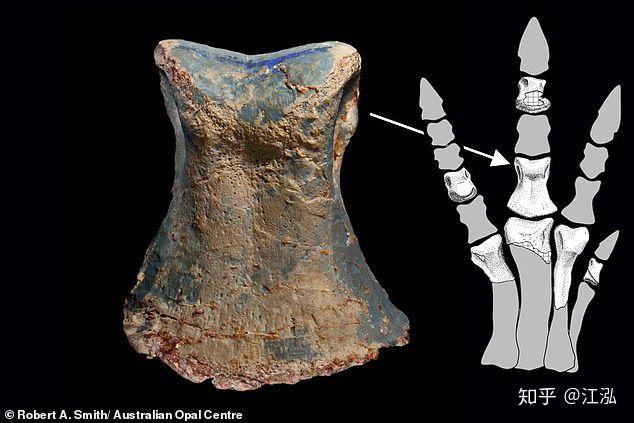 Úc phát hiện ra hóa thạch khủng long biến thành đá quý - Ảnh 10.