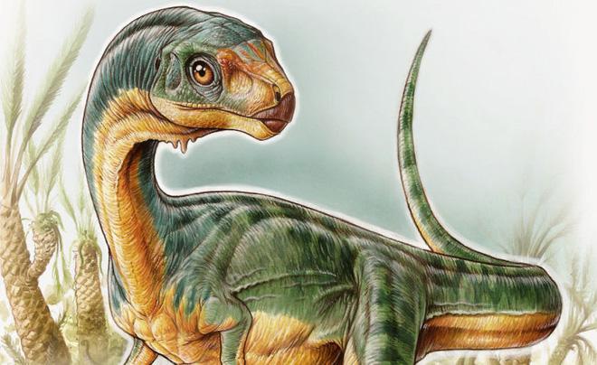 Những ví dụ cho thấy tiến hóa đôi khi cũng hà tiện, tận dụng cùng một đặc điểm cho hai loài khác nhau - Ảnh 10.