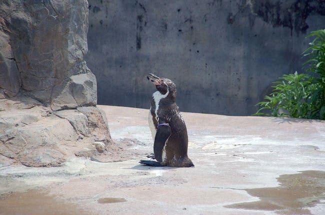 Chàng cánh cụt si tình, phải lòng nhân vật hoạt hình sau khi bị vợ bỏ rơi - Ảnh 1.