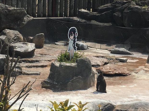Chàng cánh cụt si tình, phải lòng nhân vật hoạt hình sau khi bị vợ bỏ rơi - Ảnh 3.