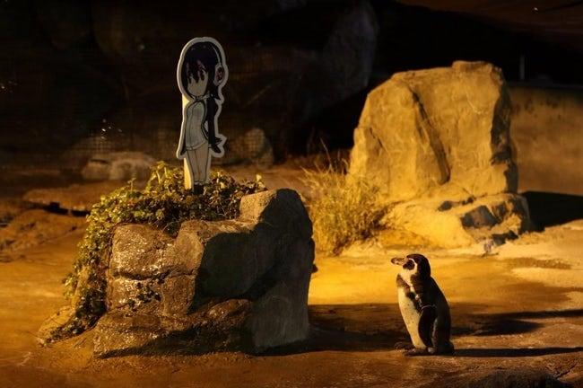 Chàng cánh cụt si tình, phải lòng nhân vật hoạt hình sau khi bị vợ bỏ rơi - Ảnh 4.