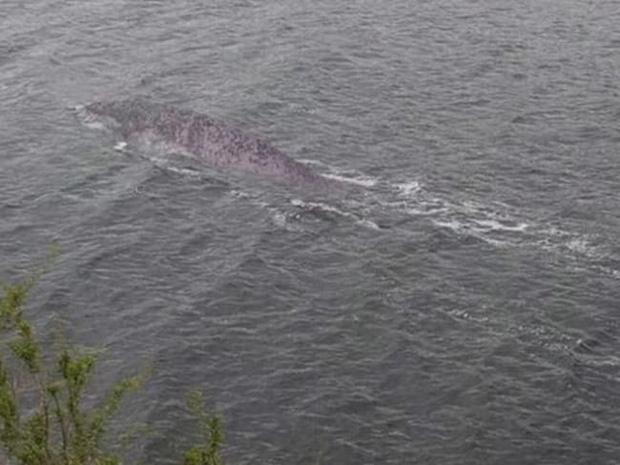 Đã tìm ra sự thật bất ngờ về bức hình ai cũng tưởng là Quái vật hồ Loch Ness đang gây bão trên mạng xã hội - Ảnh 1.