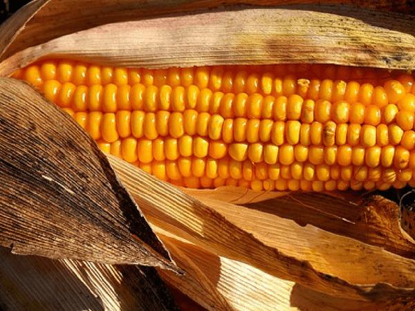 Thực phẩm vàng cho người bị bướu cổ - Ảnh 12.