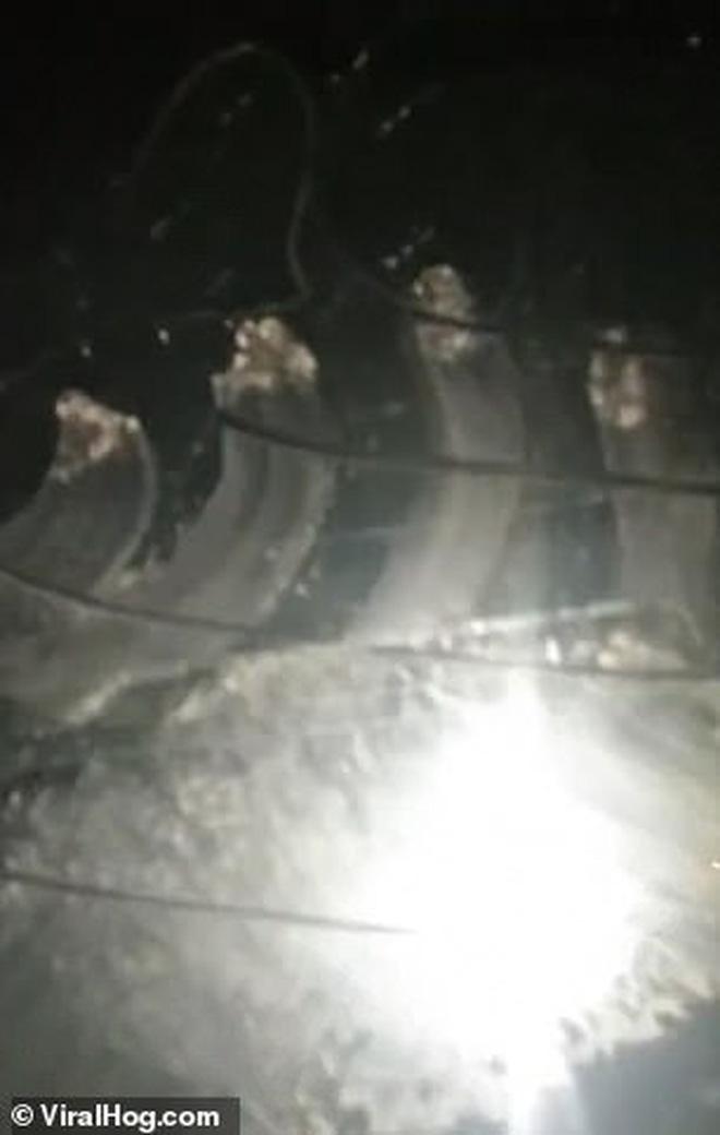 Khoảnh khắc gấu mẹ hung dữ lao vào chặn đầu xe khiến tài xế hú hồn, nhìn kỹ mới hiểu vì sao nó hành động như vậy - Ảnh 4.