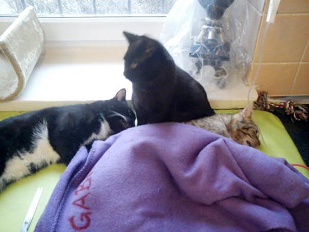Chú mèo hiếm có: Lăng xăng làm y tá gợi nghĩ đến một phẩm chất tuyệt vời ở con người - Ảnh 5.