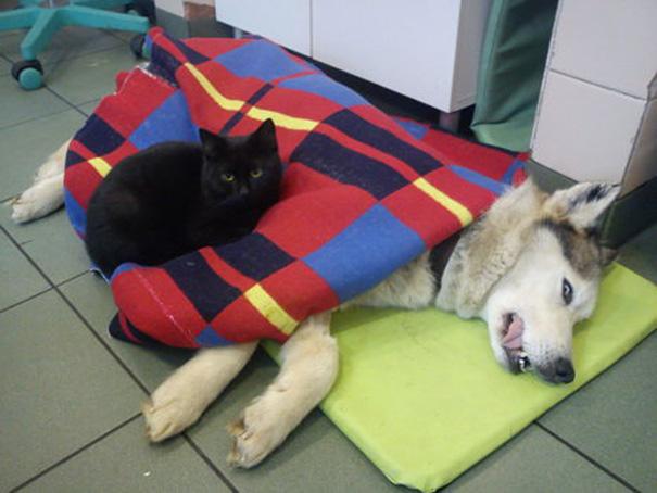 Chú mèo hiếm có: Lăng xăng làm y tá gợi nghĩ đến một phẩm chất tuyệt vời ở con người - Ảnh 6.