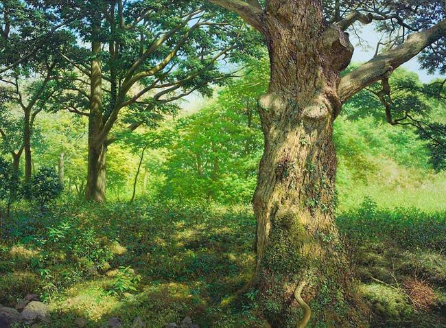 Hình ảnh cánh rừng xanh ngát xanh đem lại cảm giác yên bình khó tả nhưng ẩn chứa đằng sau đó là sự thật khó tin - Ảnh 1.