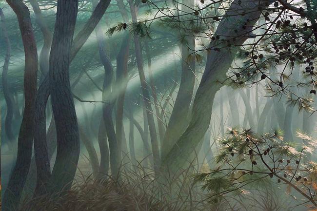 Hình ảnh cánh rừng xanh ngát xanh đem lại cảm giác yên bình khó tả nhưng ẩn chứa đằng sau đó là sự thật khó tin - Ảnh 9.