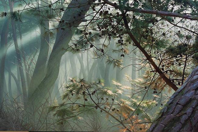 Hình ảnh cánh rừng xanh ngát xanh đem lại cảm giác yên bình khó tả nhưng ẩn chứa đằng sau đó là sự thật khó tin - Ảnh 10.