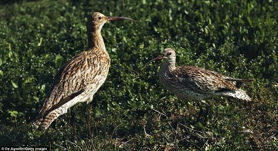 1001 thắc mắc: Những loài động vật nào có nguy cơ biến mất vĩnh viễn trên Trái Đất? - Ảnh 1.