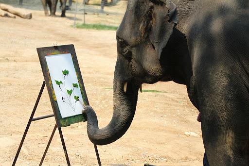 Đau lòng cảnh huấn luyện voi như địa ngục để chiều lòng du khách: Quá độc ác và tàn nhẫn! - Ảnh 4.