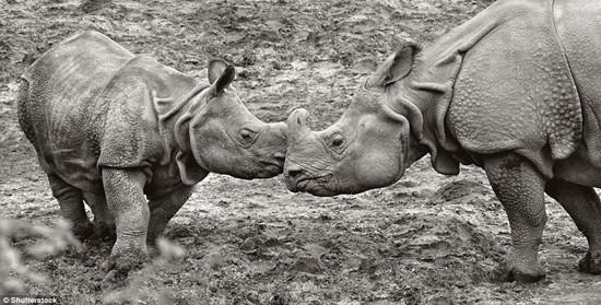 1001 thắc mắc: Những loài động vật nào có nguy cơ biến mất vĩnh viễn trên Trái Đất? - Ảnh 3.