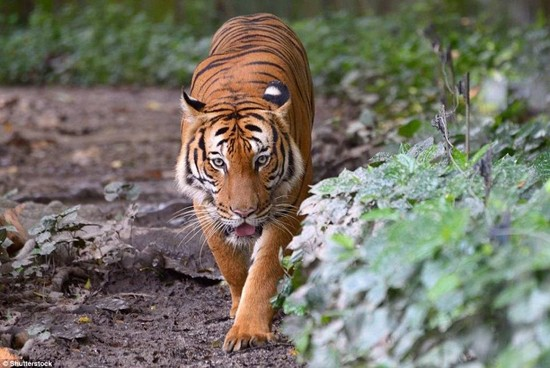 1001 thắc mắc: Những loài động vật nào có nguy cơ biến mất vĩnh viễn trên Trái Đất? - Ảnh 4.