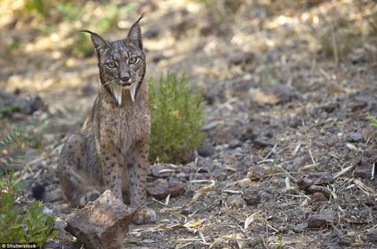 1001 thắc mắc: Những loài động vật nào có nguy cơ biến mất vĩnh viễn trên Trái Đất? - Ảnh 5.