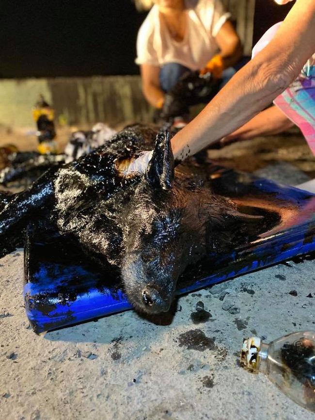 Thấy chó nhà liên tục sủa vào tảng đất sét, người dân nghi ngờ lại gần xem không ngờ cứu được một sinh mạng - Ảnh 8.