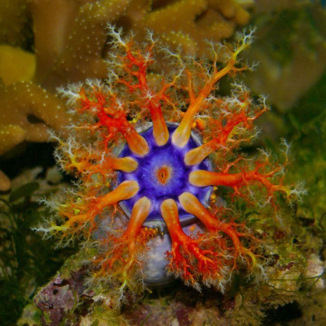 Quái vật dưới biển sâu (P2) - Ảnh 1.