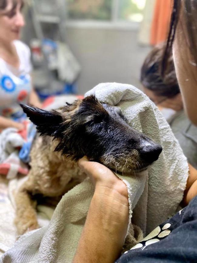 Thấy chó nhà liên tục sủa vào tảng đất sét, người dân nghi ngờ lại gần xem không ngờ cứu được một sinh mạng - Ảnh 5.