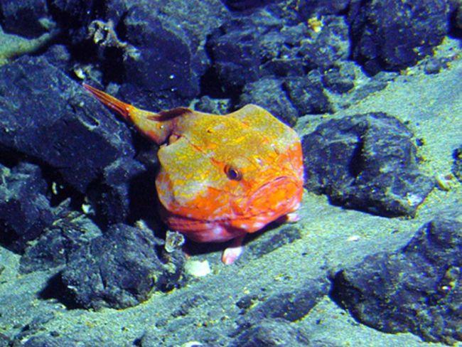 Quái vật dưới biển sâu (P2) - Ảnh 6.