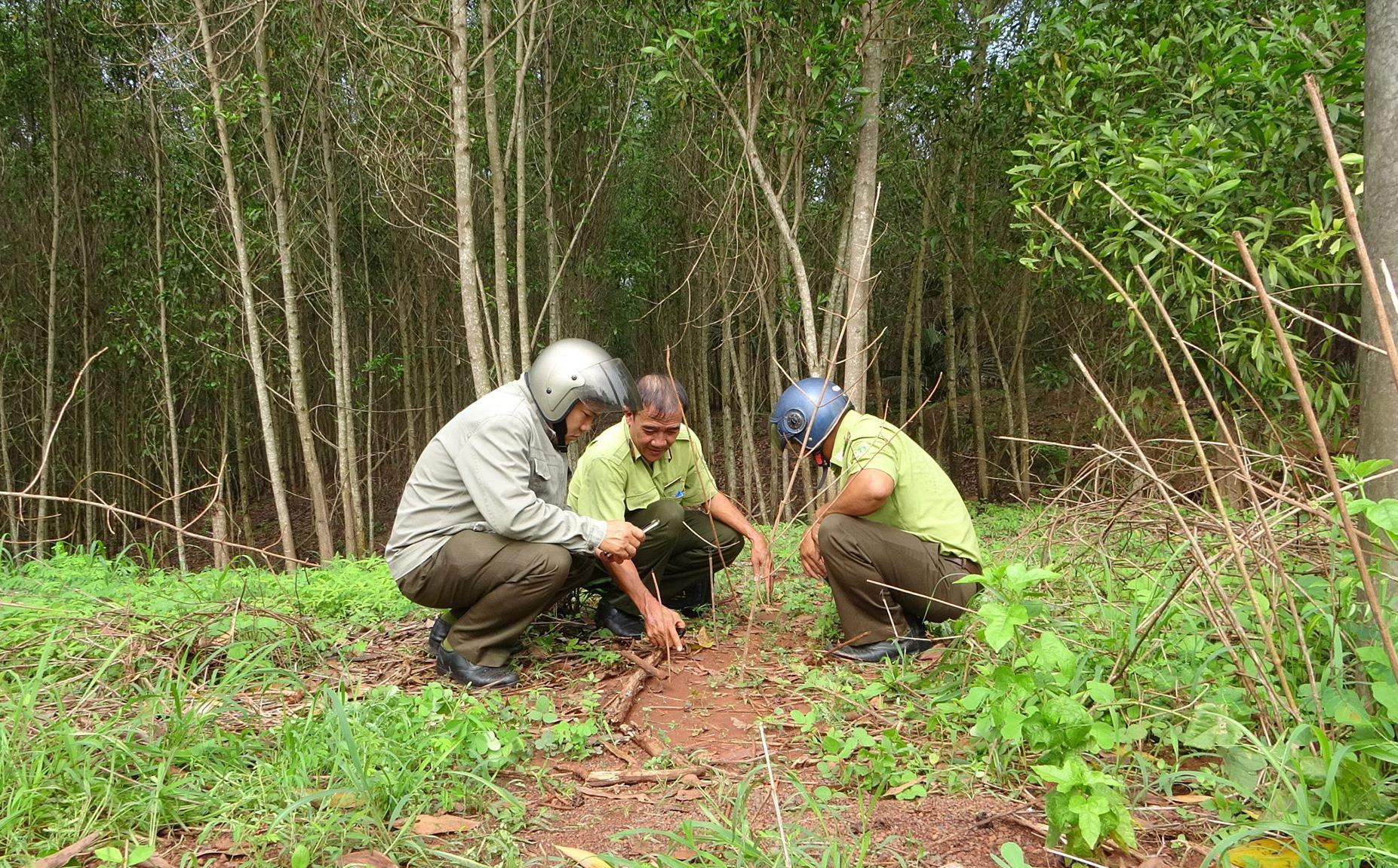 Tìm thấy dấu chân chó tại nơi 2 con báo đen nghi xuất hiện ở giáp ranh 3 xã tại tỉnh Đồng Nai