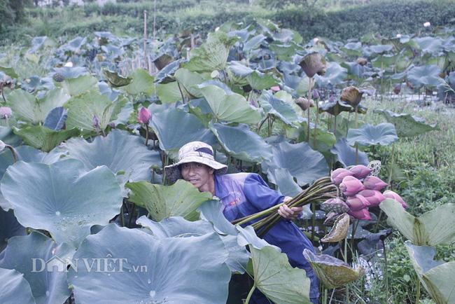 Lai Châu: Ao thả cá chả vui, trồng cây lá to như cái thúng lại đông người tới xem - Ảnh 2.