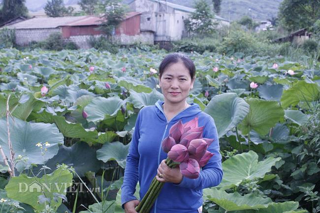 Lai Châu: Ao thả cá chả vui, trồng cây lá to như cái thúng lại đông người tới xem - Ảnh 3.