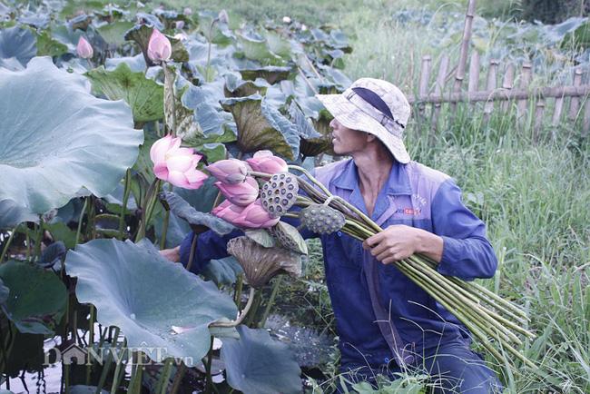 Lai Châu: Ao thả cá chả vui, trồng cây lá to như cái thúng lại đông người tới xem - Ảnh 4.