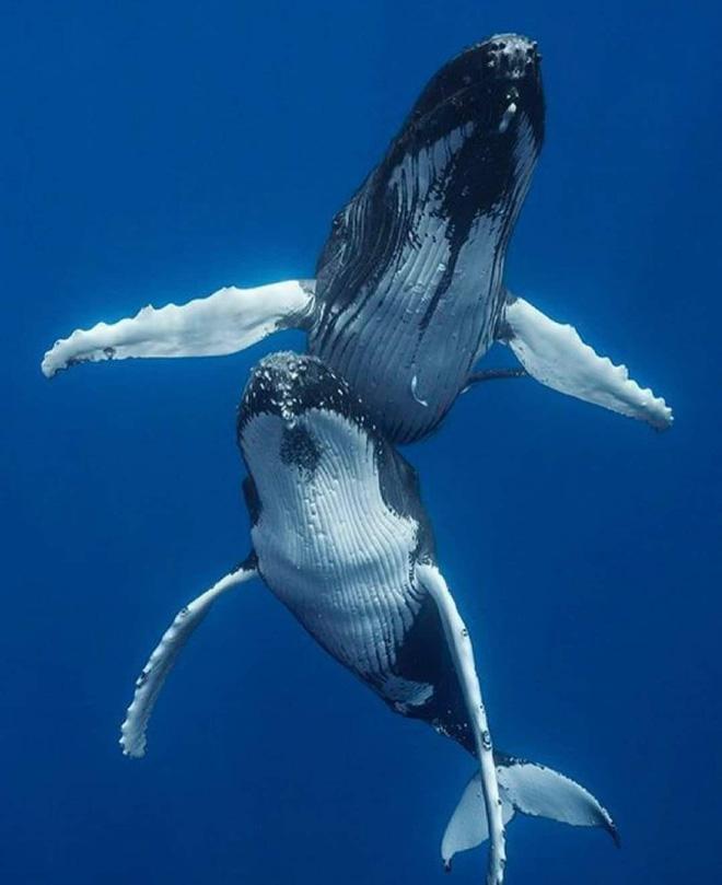 Cá voi răng vương miện: Làm sáng tỏ điểm khởi đầu của sự tiến hóa của cá voi tấm sừng - Ảnh 3.