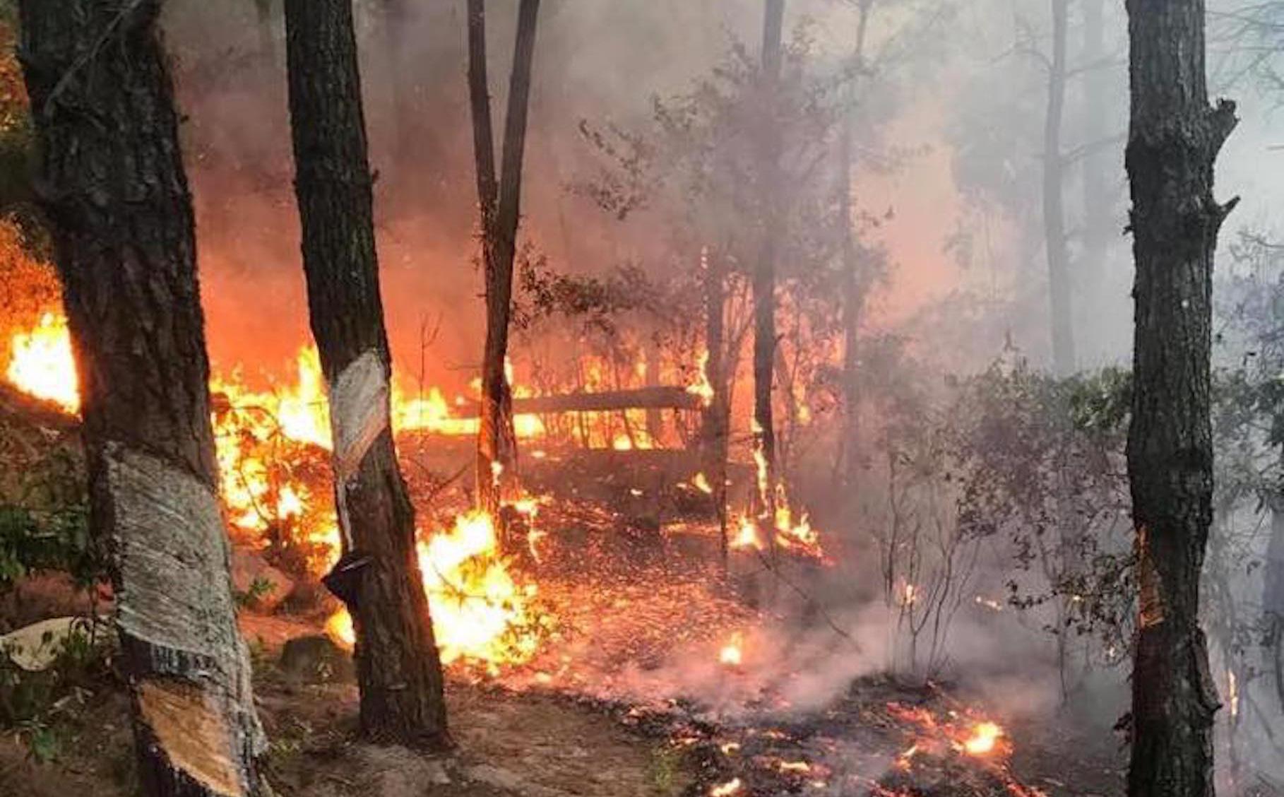 Người phụ nữ đốt rác rồi bỏ vào nhà, không ngờ lửa lan cháy cả cánh rừng