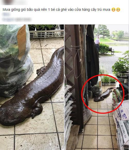 Đến tận cửa hỏi thăm nhà dân sau trận mưa lớn, chú cá kỳ lạ khiến dân mạng tranh cãi: Đây là cá trê đại bự phiên bản mọc chân? - Ảnh 1.