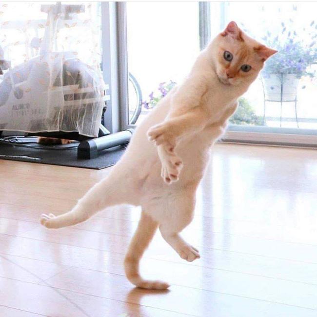 Đại boss mèo thử nhảy hip hop xoay đầu, cắt kéo cực nghệ và cú chốt không ai lường trước - ảnh 1