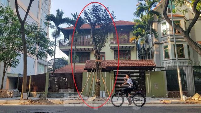 Chủ biệt thự đô thị kiểu mẫu Hà Nội chơi ngông tự chặt cây, lát vỉa hè đế vương - Ảnh 4.