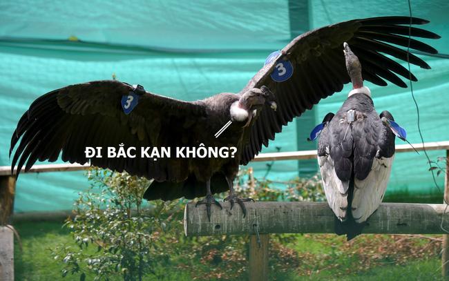 Chiêm ngưỡng thần ưng có thể bay một phát từ Hà Nội về Bắc Kạn mà không cần đập cánh - Ảnh 4.