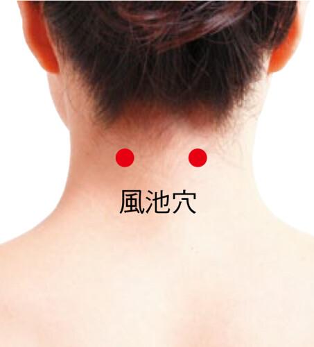 [Bấm huyệt mỗi ngày] Huyệt phong trì – cải thiện ngay những căn bệnh ở vùng đầu cổ - Ảnh 1.