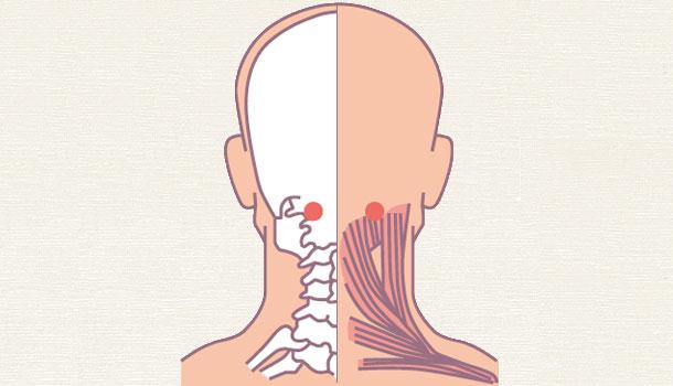 [Bấm huyệt mỗi ngày] Huyệt phong trì – cải thiện ngay những căn bệnh ở vùng đầu cổ - Ảnh 4.