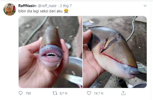 Thực hư đằng sau chuyện con cá lạ với cái miệng giống hệt của người được đăng tải lên mạng - Ảnh 1.