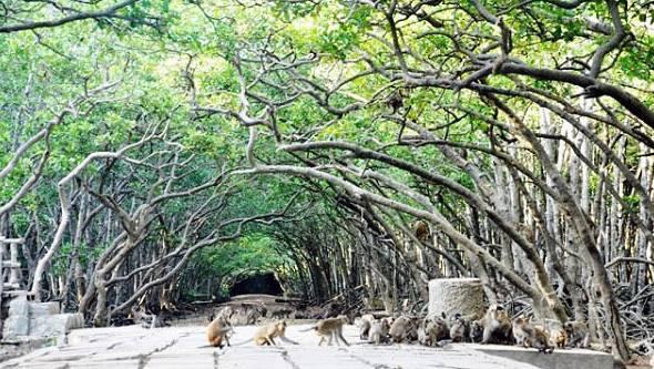 Du ngoạn hòn đảo 2.000 con khỉ ở Cần Giờ chỉ chưa tới 100.000 đồng - Ảnh 7.