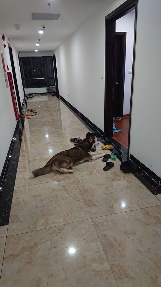 Bình thường toàn ngó lơ hàng xóm, khi thấy bánh gato lại cố làm thân: Chú chó khiến chủ phải đi nhặt liêm sỉ giúp! - Ảnh 3.