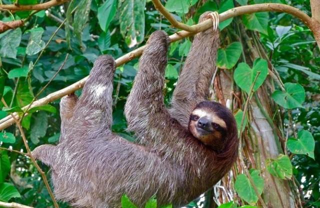 1001 thắc mắc: Những loài động vật nào nổi tiếng về độ ngớ ngẩn? - Ảnh 1.