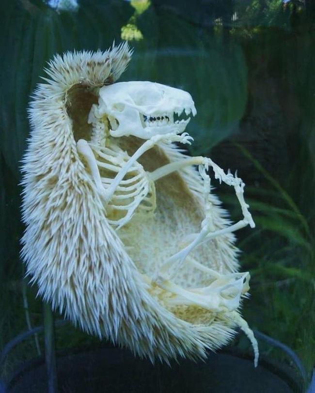 21 bức ảnh những loài động vật kỳ lạ huyền bí có thật trên Trái đất mà cứ ngỡ chỉ xuất hiện trong thần thoại - Ảnh 20.