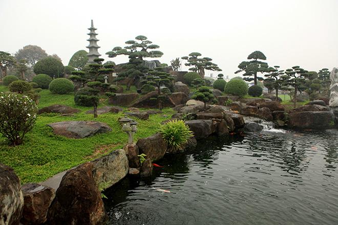 Chơi cây cảnh tiền tỷ chưa đã, đại gia nổi danh Thái Nguyên mua hẳn đá quý làm hồ cá Koi - Ảnh 3.