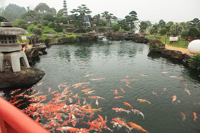 Chơi cây cảnh tiền tỷ chưa đã, đại gia nổi danh Thái Nguyên mua hẳn đá quý làm hồ cá Koi - Ảnh 4.