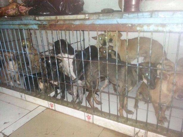 Cảnh dân làng đánh đập kẻ trộm chó ở Việt Nam lên báo Anh khiến nhiều người rùng mình - Ảnh 2.