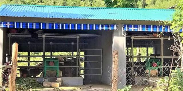 Cận cảnh chuồng bò hạng sang, có loại giá hơn 230 triệu đồng ở Nghệ An - Ảnh 3.