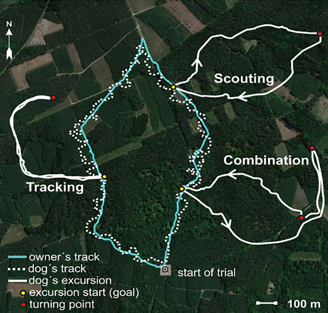 Tại sao chó đi chơi luôn biết đường về nhà? Nghiên cứu mới cho thấy chúng định vị được phương hướng bằng từ trường Trái Đất - Ảnh 1.