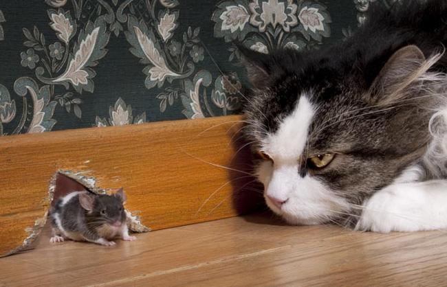 Nhìn thấy mèo là sợ, chuột cầu cứu sự giúp đỡ đến 3 lần và hồi kết khiến nhiều người giật mình xem lại bản thân - Ảnh 2.