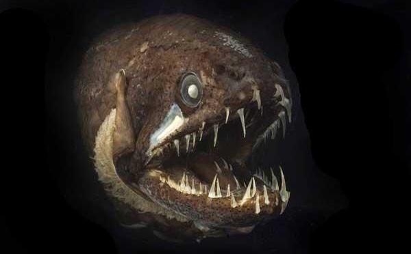 'Quái vật' dưới biển sâu (P3)