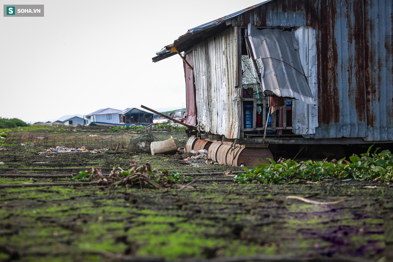 [ẢNH] 200 nhà bè mắc cạn giữa thảm cỏ xanh mướt ở lòng hồ Trị An - Ảnh 5.