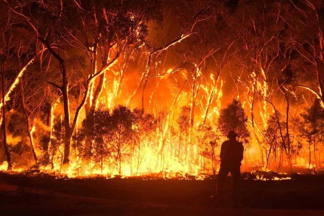 Năm 2020 hoang tàn của người Úc: Chưa kể đại dịch, trận cháy rừng đại thảm họa hồi đầu năm đã khiến gần 3 TỈ sinh vật khốn khổ - Ảnh 2.
