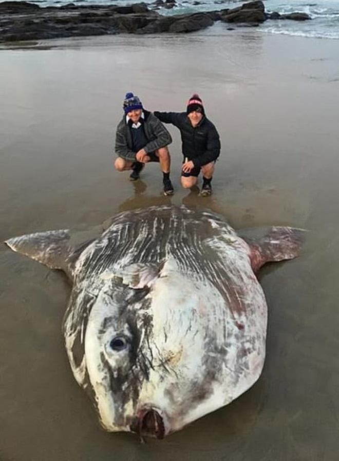 Phát hiện sinh vật khổng lồ trôi dạt vào bờ biển khiến du khách hết hồn vì nghĩ rằng nó đến từ hành tinh khác - Ảnh 1.